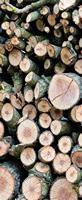 Stoffbanner Wood